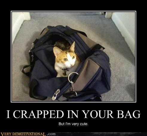 Cats cute demotivational hilarious poop - 3303323648