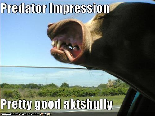 car impression Movie Predator whatbreed wind window - 3304356608
