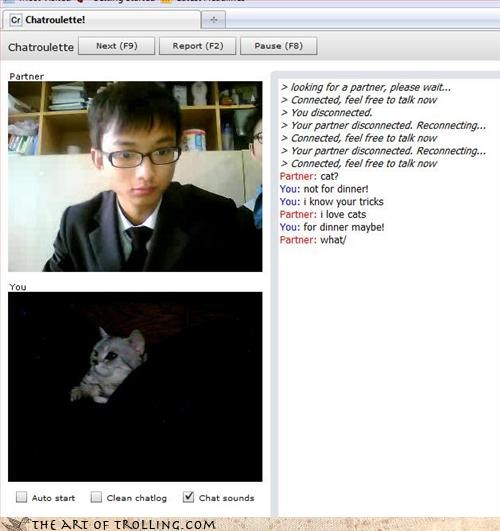 cat Chat Roulette food lunch time yummy - 3304399360