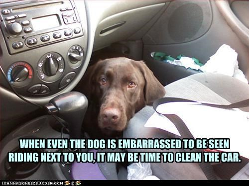 WHEN EVEN THE DOG IS EMBARRASSED TO BE SEEN RIDING NEXT TO YOU, IT MAY BE TIME TO CLEAN THE CAR.