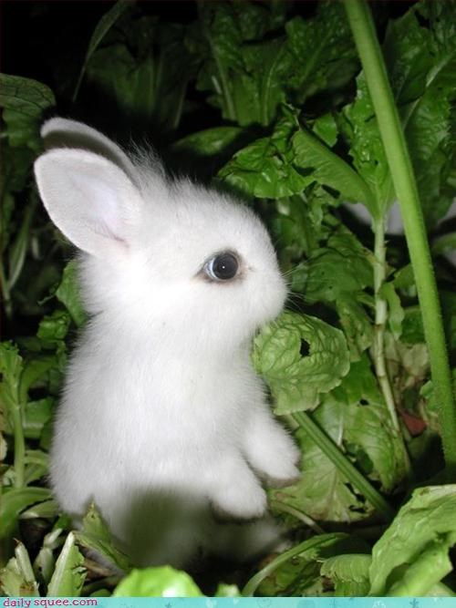 baby cute rabbit - 3305272320