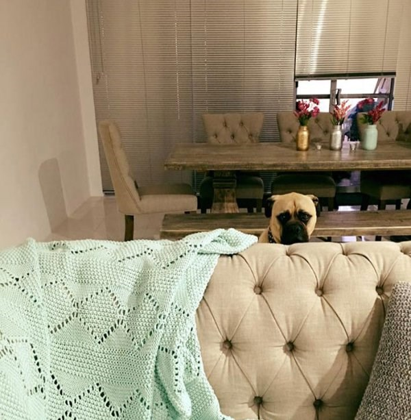 photos of a stalker dog