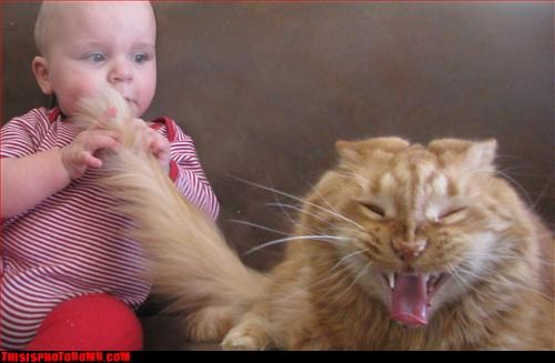 anger management Animal Bomb animals Babies Cats Hall of Fame - 3305597184