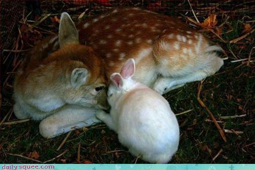 deer nap rabbit - 3305717248