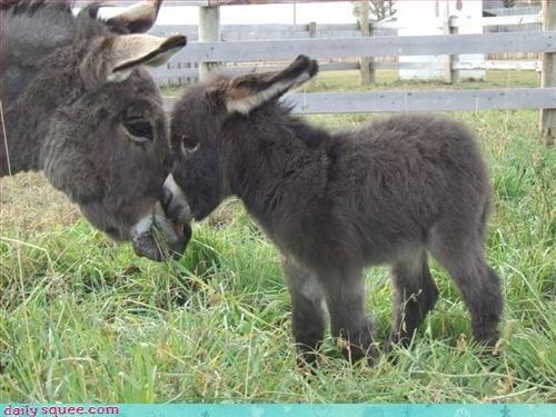 baby donkey fuzzy - 3305971968