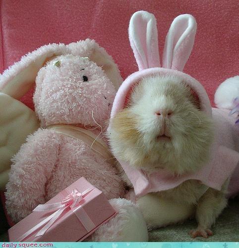 bunny easter guinea pig - 3306043392
