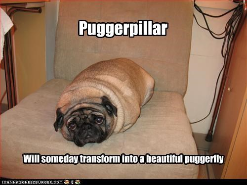 beautiful caterpillar cute Hall of Fame metamorphosis neologism pug puggerfly sad face transform - 3306309632