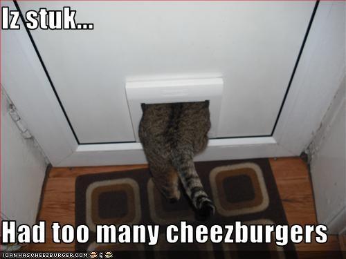 Cheezburger Image 3306596096