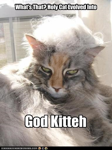 What's That? Holy Cat Evolved Into God Kitteh