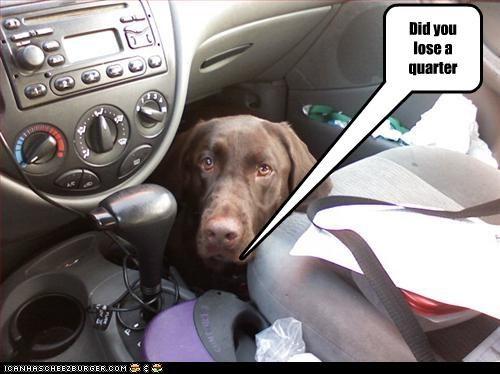 car dogs lab lost something quarter - 3306760704