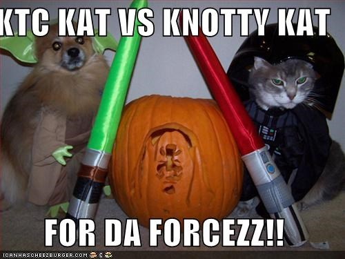Ktc Kat Vs Knotty Kat For Da Forcezz Cheezburger Funny Memes