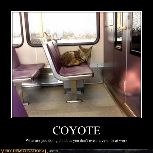 bus coyote hilarious maybe-its-a-train-so-you-might-want-to-troll-about-that public transportation really tho the idea of a coyote taking either a train or a bus is pretty funny to me what - 3307171584