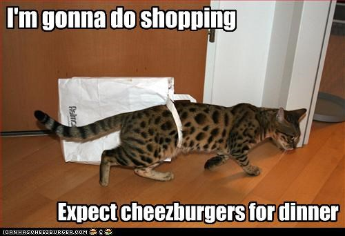 Cheezburger Image 3308161792