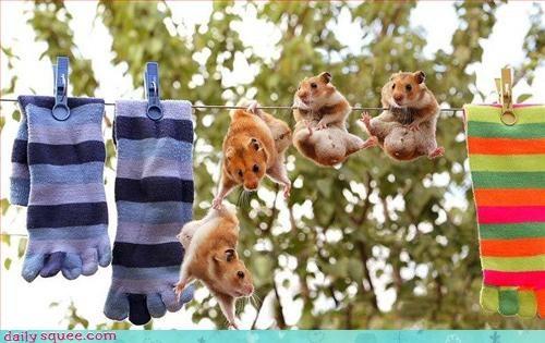 cute hamster pet - 3309077760
