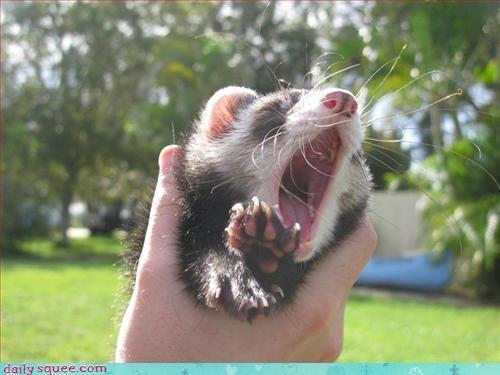 cute face ferret - 3310296064