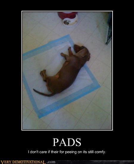 PADS I don't care if their for peeing on its still comfy.