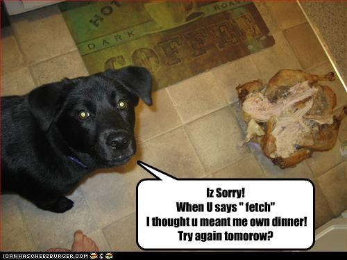 """Iz Sorry! When U says """" fetch"""" I thought u meant me own dinner! Try again tomorow?"""