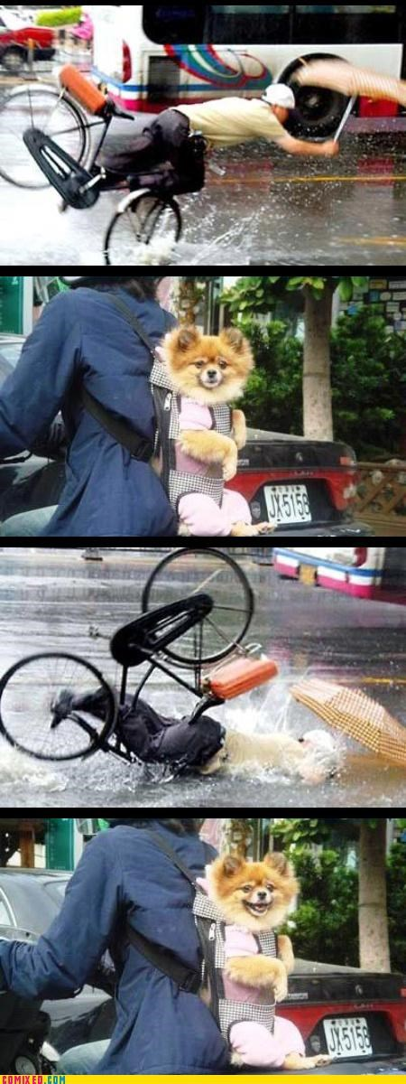 animals bike crash dogs FAIL reaction dogs - 3311160576