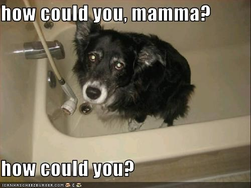 accusation,bath,border collie,guilt trip,how could you,mom