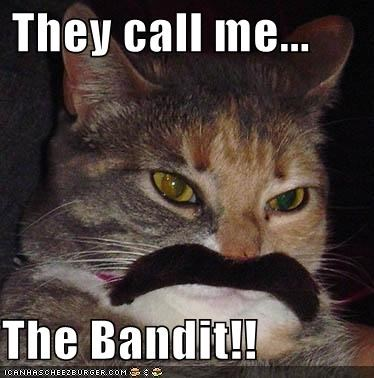 They Call Me The Bandit Cheezburger Funny Memes Funny