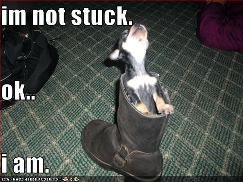 boot chihuahua denial stuck - 3312324864