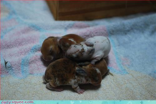 bunny,cute,pile