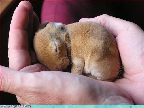cute sleeping bunny in person's hand