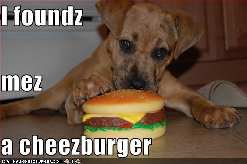 Cheezburger Image 3313459968