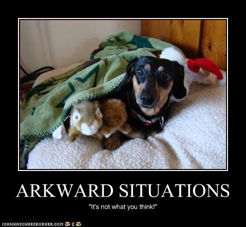 "ARKWARD SITUATIONS ""It's not what you think!"""