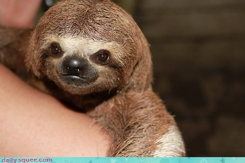 cute,lookalikes,sloth