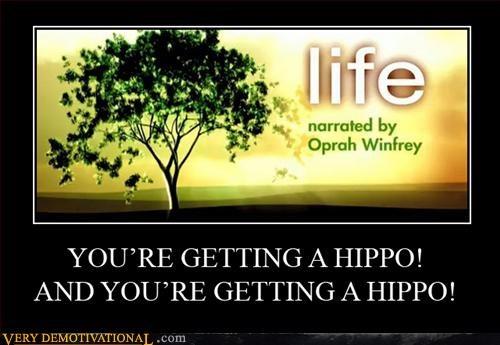 give away oprah hippo - 3314218240