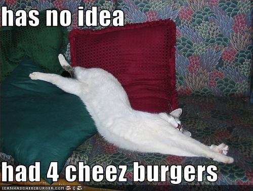 Cheezburger Image 3314728192