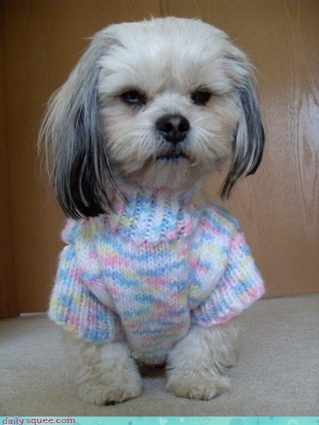 dogs,puppy,sweater