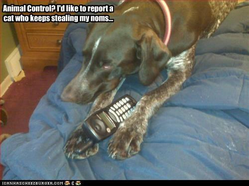 animal control cat noms phone phone call report stealing whatbreed - 3315697408