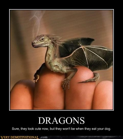 dragon,tiny,cute,dangerous