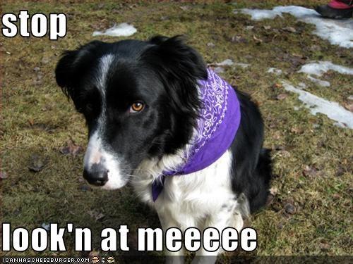 Cheezburger Image 3316497152