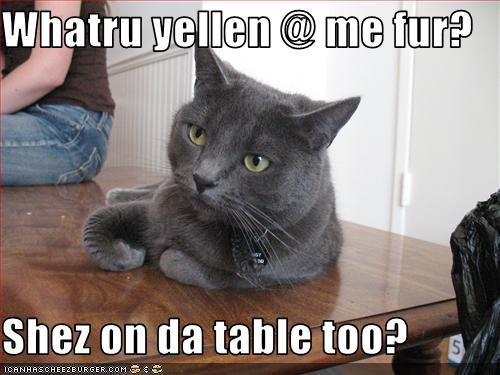 bad cat confused table - 3316708864