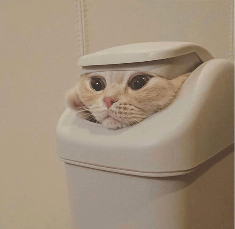 a funny photo of a cat imitating the game of throne scene