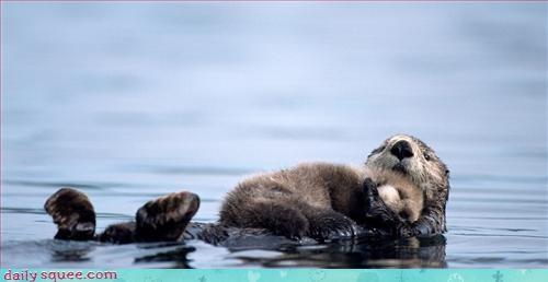 adorable hug otter - 3317249792