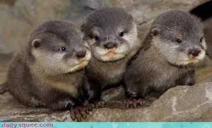 adorable,cute,otters
