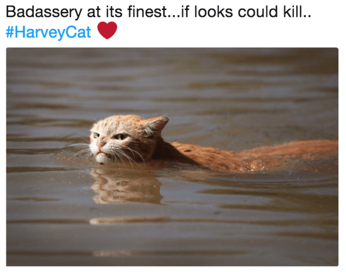 a funny list of memes from the angry cat of hurricane harvey