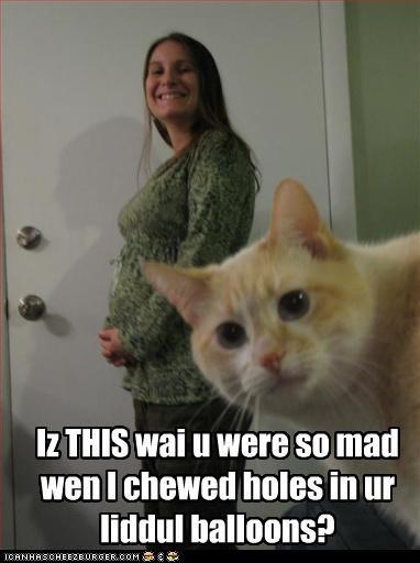 bad cat confused pregnant - 3318034944
