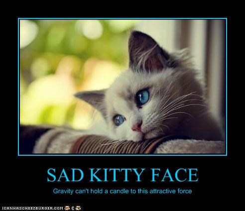 SAD KITTY FACE Gravity can't hold a candle to this attractive force