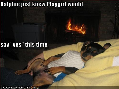 doberman pinscher,fireplace,human,magazine,Photo,playgirl,pose,puppy,shirt