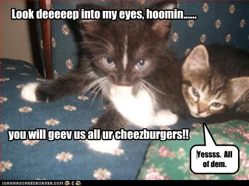 cheezburger cute hypnotize kitten plotting want