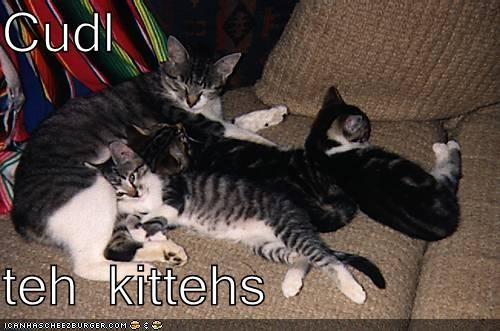 Cudl  teh kittehs