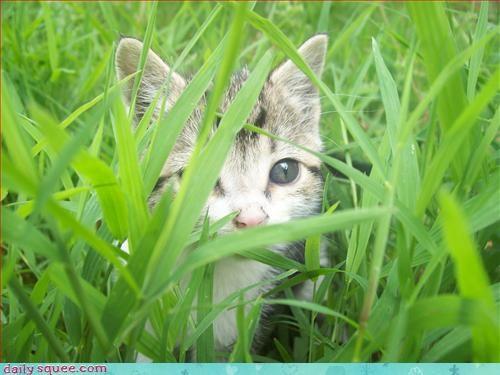 adventure time kitten mathematical - 3320475392