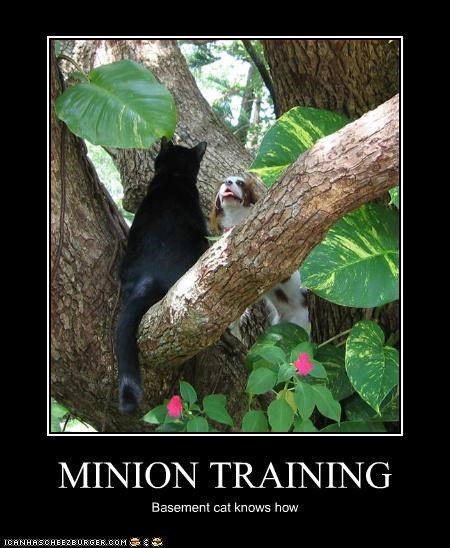 MINION TRAINING Basement cat knows how