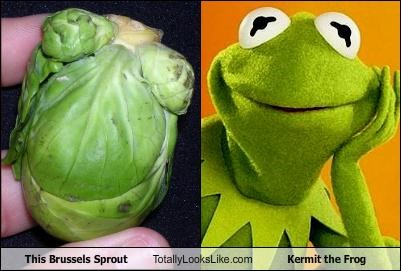 brussels sprout food kermit the frog muppets - 3320641536
