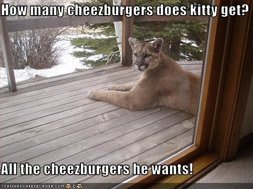 Cheezburger Image 3320857856